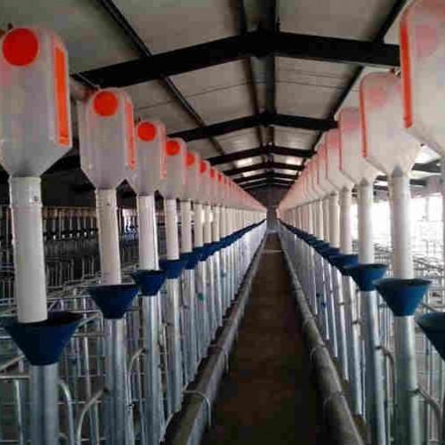 青藏自动化养猪设备订制/开元持久耐用量大优惠