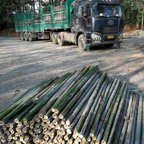 竹片竹杆(绿化杆)