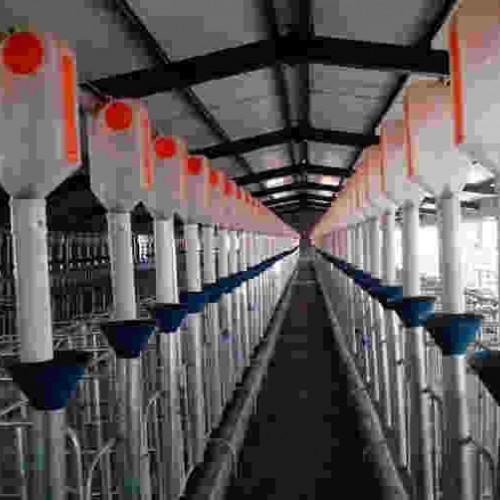江苏自动化养猪设备加工|开元畜牧多规格可选量大优惠