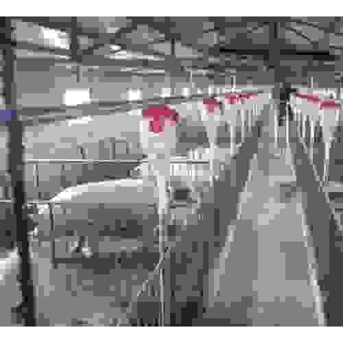 海南猪场设备生产定制 开元多规格可选价格优惠
