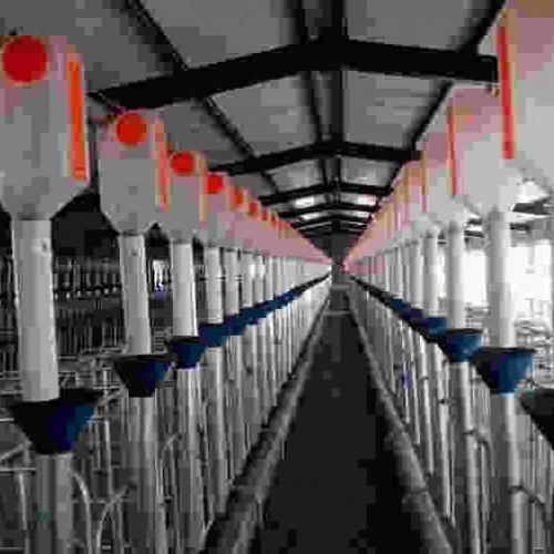 黑龙江养猪设备订做|开元畜牧支持定制量大优惠