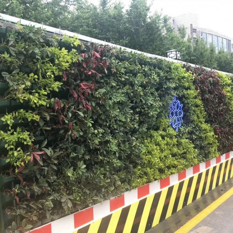 """真植绿植围挡,会呼吸的""""墙"""""""