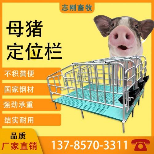 热卖养猪设备定位栏带漏粪板猪用养殖设备限位栏配件产床保育两用