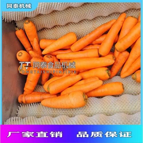 小型胡萝卜清洗机 不锈钢毛辊清洗机  胡萝卜清洗机价格