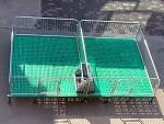 上海「保育床」多少钱@志航机械模具仔猪保育床-质量优良
