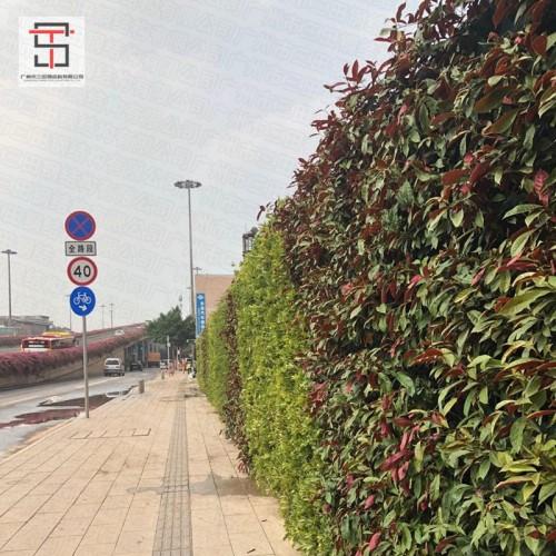 三田绿植围挡为扮靓城市增添一份力