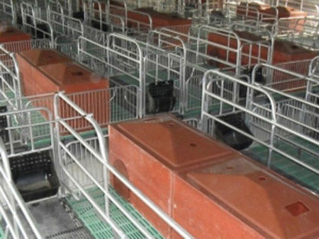新疆母猪产床「旺农畜牧设备」全自动刮粪机