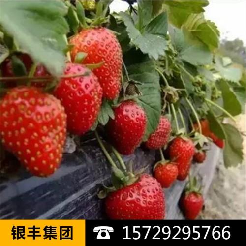 厂家定做生产塑料布油布草莓膜西瓜膜长寿流滴消雾膜