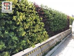 广州绿植围挡应用广泛让人喜爱不已