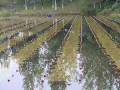 江苏维也维山:以石墨烯技术为核心 成为专业领先水环境治理商