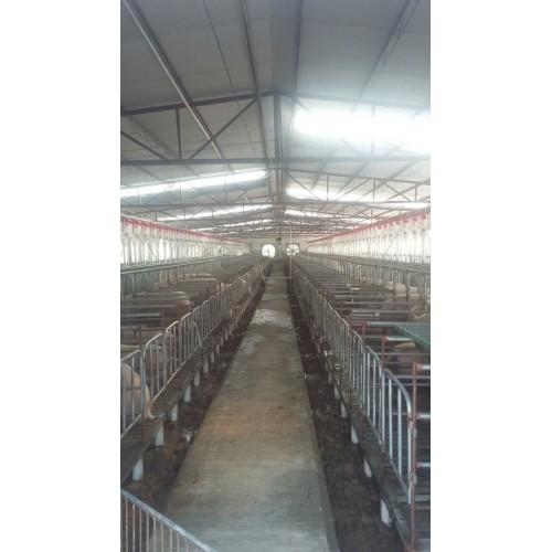 甘肃自动化喂猪设备生产企业|开元厂家供应养猪自动喂料系统