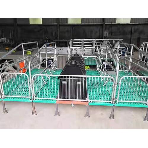 母猪产床厂家直供/金码畜牧设备安全可靠