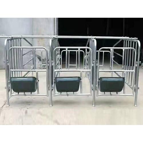 福建定位栏厂家直供/金码畜牧设备质量保证
