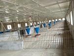 山西太原猪场育肥料线「金福临」养猪自动化料线/求购