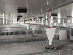 浙江杭州自动化养猪设备「金福临」猪场养猪料线/费用